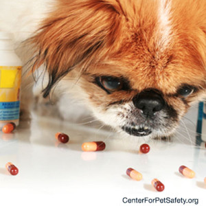 cps_blog400x400-pet_poisoning
