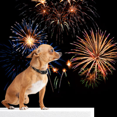 Fireworks are fun, but not pet friendly. Please keep pets safe inside on the 4th of July.
