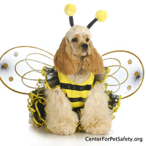 Center for Pet Safety Halloween Safety Tips